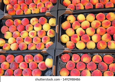 many full boxes of organic ripe peaches for sale