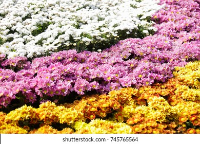 Many garden flowers,Floral background,Bunch of flowers,wedding bouquet with rose bush, Ranunculus asiaticus as a background.