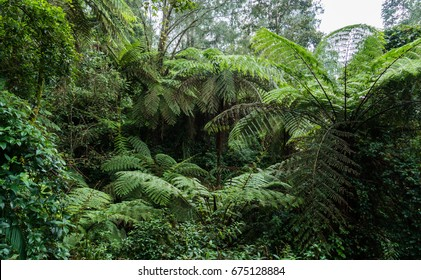 Many gigantic fern trees, vines and shrubs located in Indonesia tropical rain forest.