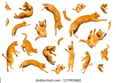 Many ginger flying and jumping funny cats isolated on a white background