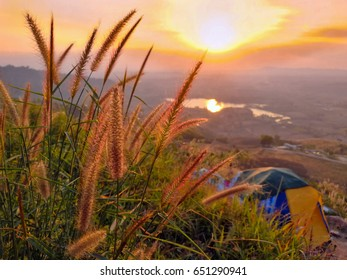 Many grass flowers on the mountainside behind have a camping tent in the evening light.