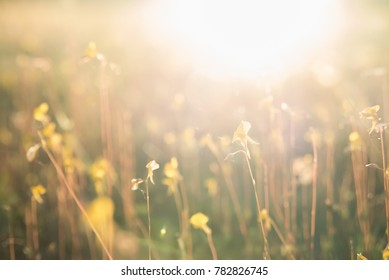 Many grass flowers in warm natural light, select focus, blur, natural bokeh.
