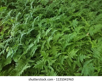 many green ferns on the ground