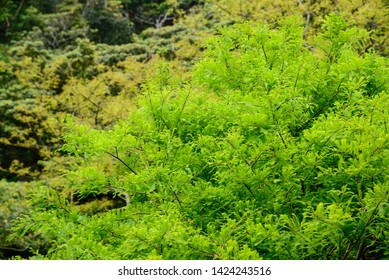 Many green plants can be seen in the mountains