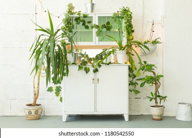Many green plants in light white interior
