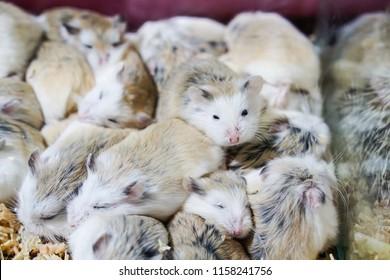 Grey Hamster Images, Stock Photos & Vectors | Shutterstock