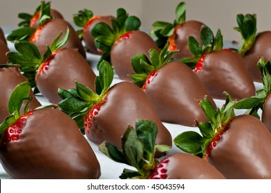 Many hand dipped chocolate covered strawberries in a row with large depth of field