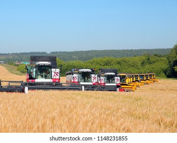 Many harvesters work on a wheat field. Agricultural machinery collects crops