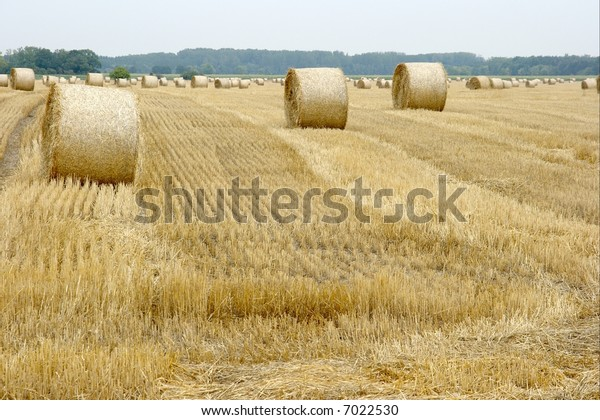 Many haystacks on a bright agricultural field