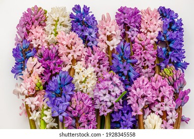 Many Hyacinth Orientalis blooms, Multicolored mixed. Multicolor hyacinth flowers background. Spring hyacinths blossom.