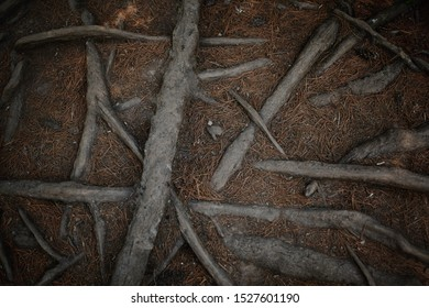 many intertwined tree roots in ground