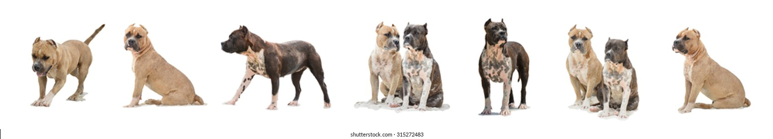 many isolated dogs, a lot of dogs on a white background