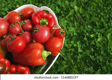 Many juicy fresh tomatoes and red sweet bell pepper with water drops in a basket close-up macro on green grass in nature top view, copy space.