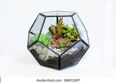 Many kind of cactus compose in pentagon glass box terrarium style isolated on white background