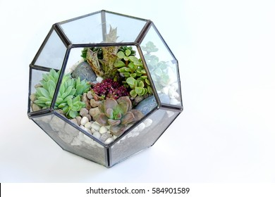 Many kind of cactus in pentagon glass box with isolated background