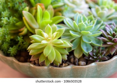 many kinds of cactus in flowerpot