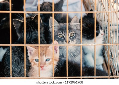 Many kittens in a cage. Adorable small sad kittens sitting in a cat carrier or crate waiting to be adopted at a pet fair.