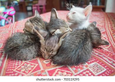 Many kittens sleep together.
