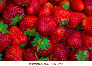 many large, bright, juicy, beautiful strawberries. ripe berries