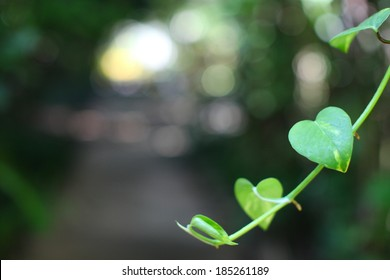 many leaf of the tree in the form of heart