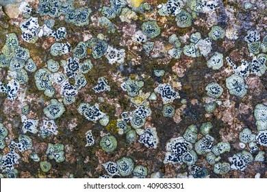 Many Lichen Covering Old Stone for Your Background