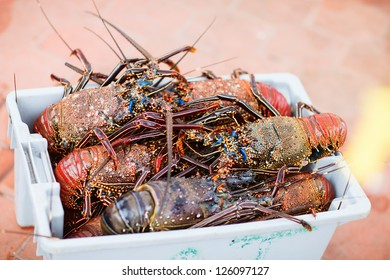 Many lobsters for sale at seafood market