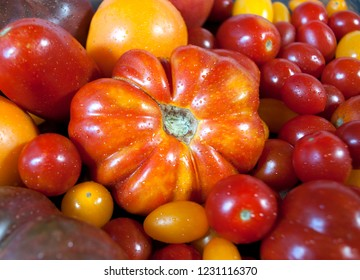 So Many Lucious Heirloom Tomatoes