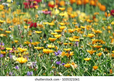 Many Marigold And Bellflower Among The Tall Wild Grass On The Alpine Slide In The Back Yard Garden. Wild Flowers In Summer Garden Landscaping. Floral Background.