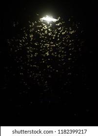 many Mayfly Swarming street light at Night