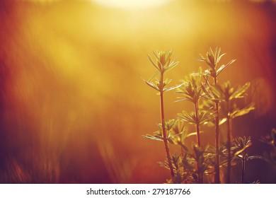 Many meadow wild green flowers on sunrise orange background