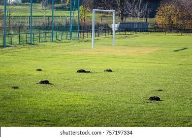 Many molehills / mole mounds on football (soccer) field