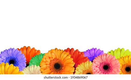 many multicoloured  bloomed flowers gerbera on white background, isolated