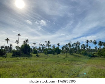 Many palm tree arise on the green field with the morning sun shining light above. And the cloudy blue sky as a background.