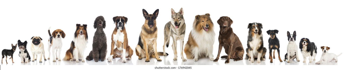 Many pedigree dogs