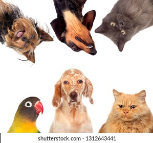 Many pets isolated on a white background