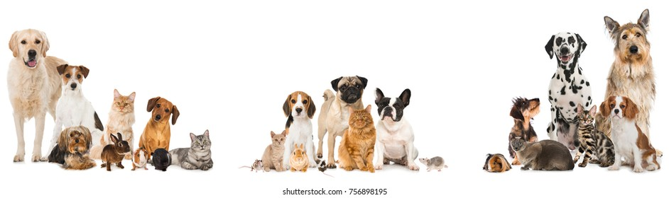 Many pets isolated on white background