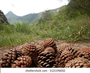 Many pine cones on a path in the mountains