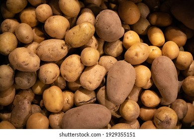 many potatoes on one spot. healthy food vegetables