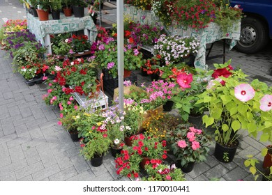many potted flowers for sale at floreal market on the street