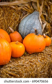 Many pumpkins and other squash