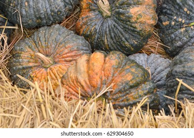 many pumpkins texture background in market