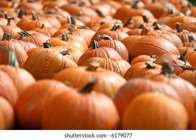 Many pumpkins that can be used as a background