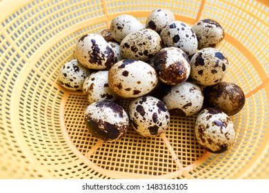 Many raw quail eggs in yellow basket. Quail eggs are more nutritious and healthier than chicken eggs. Quail eggs contain 13% protein.