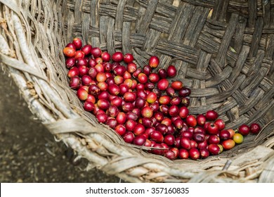 many red coffee cherries in a woven basket