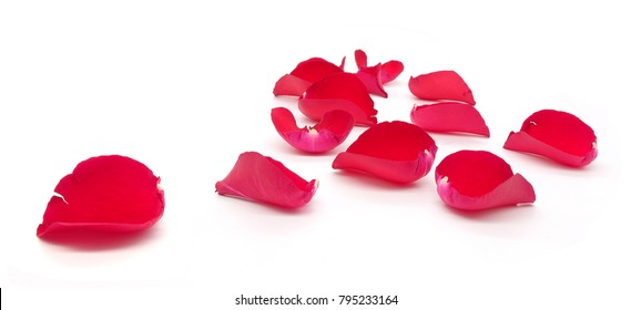 many red rose petals isolated on white background