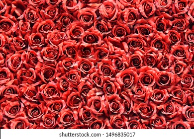 many red roses photo wallpaper
