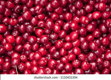 Many ripe berries of red cherries