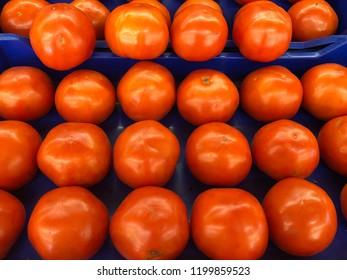 Many ripe tomatoes