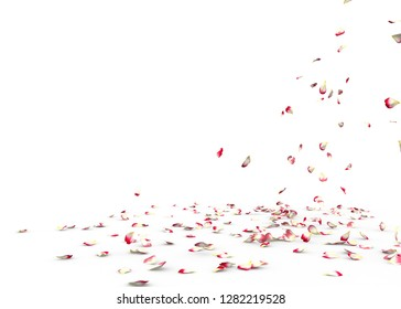 Many rose petals fall on the floor. Isolated on white background