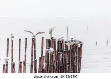 Many seagulls standing on piers in raining day,Thailand.